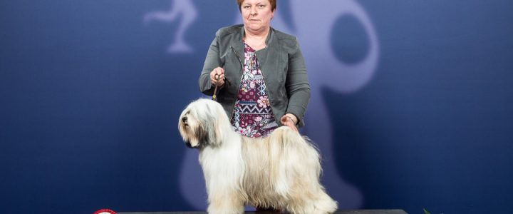 Q'Margaux Best of Breed in de Antwerpse Winner